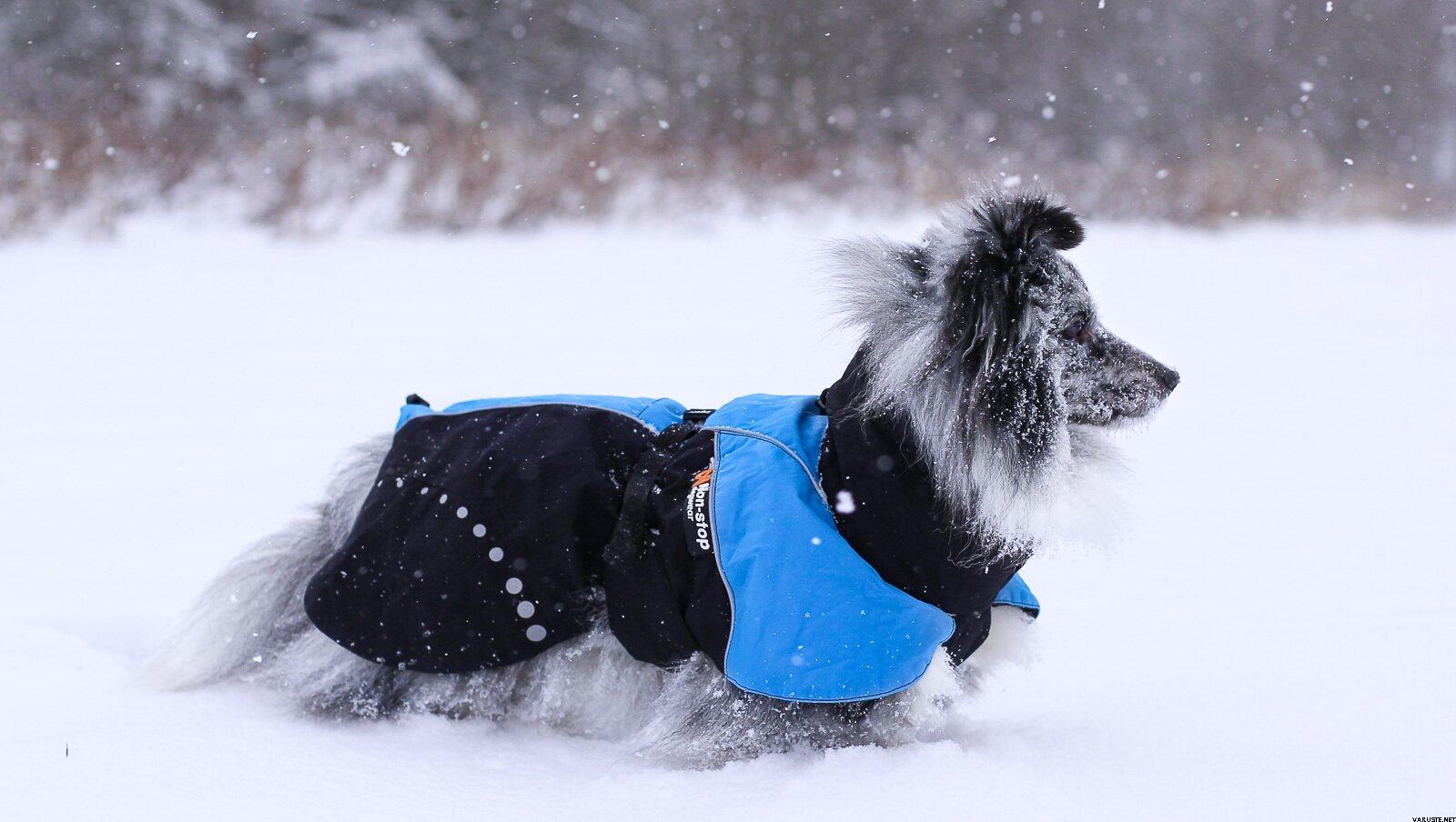 Blue Non-Stop dogwear Non-Stop Alpha Pro Jacket bleu